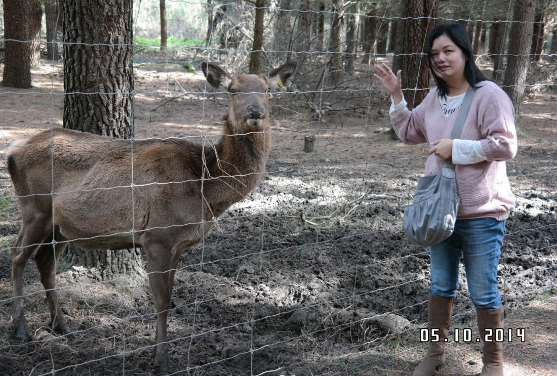 nzd2 deer