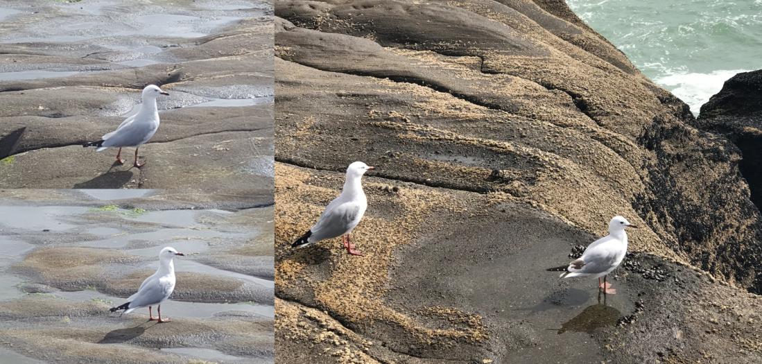 birds on headland