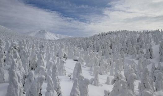 yamagata snow monster
